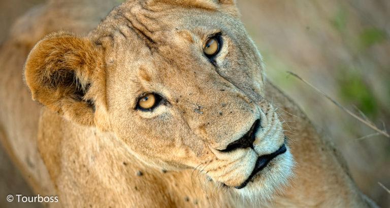 Групповые туры в Кению