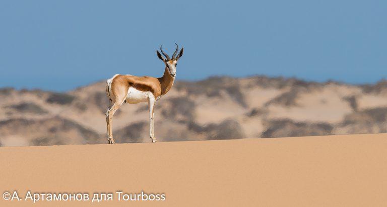Частная концессия Nabibrand Private Reserve Намибия