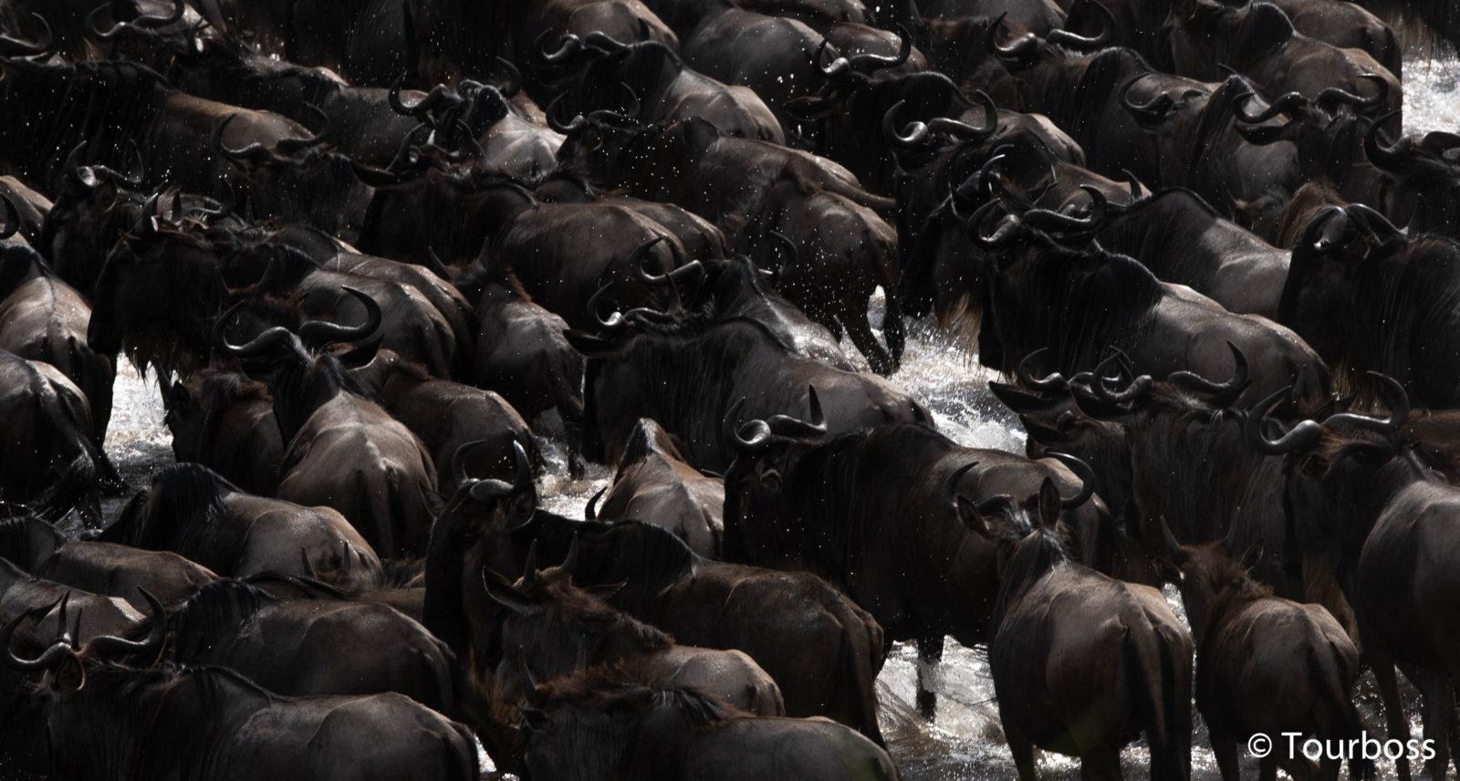 Великая Миграция в Танзании