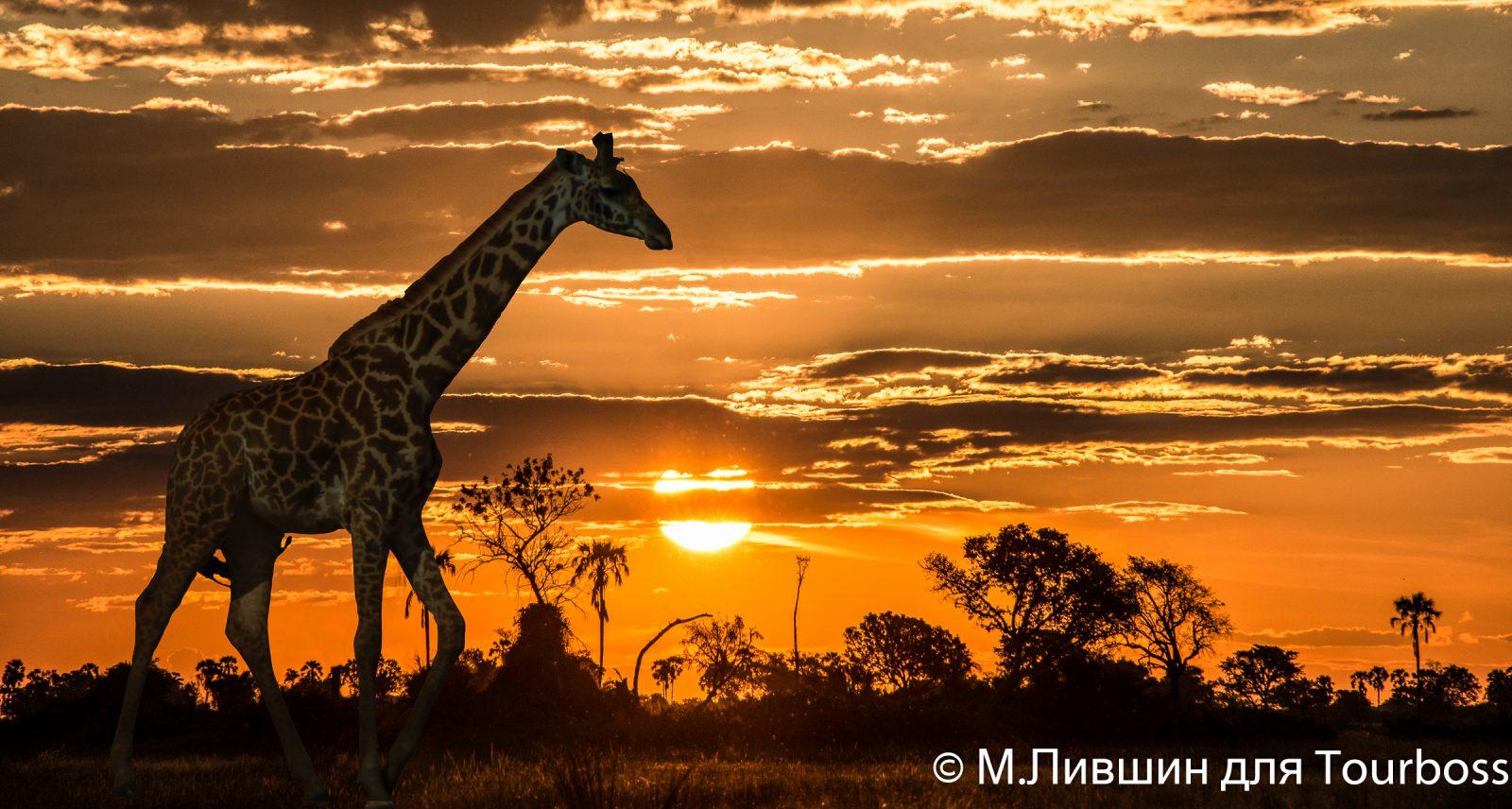 Туры в Ботсвану цены