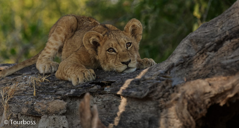 Фото Зимбабве