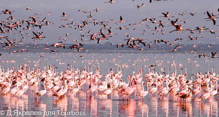 Озеро Накуру, фото туристов