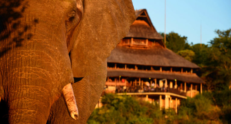 Victoria Falls Safari Lodge, Зимбабве