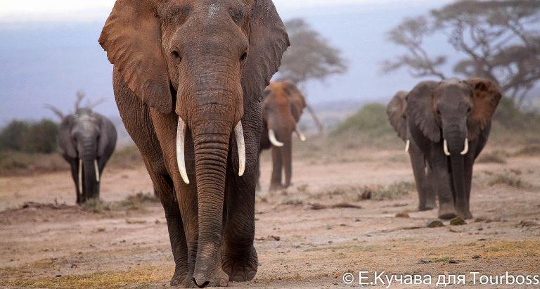 Фото туристов в Масаи Мара, Кения