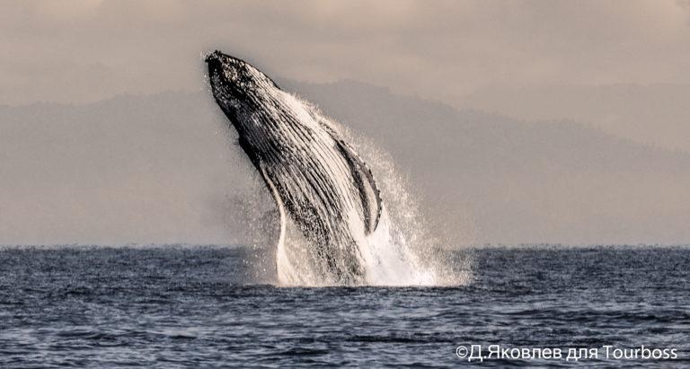 Миграция китов в ЮАР