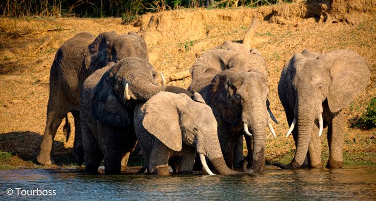 Туры в Зимбабве
