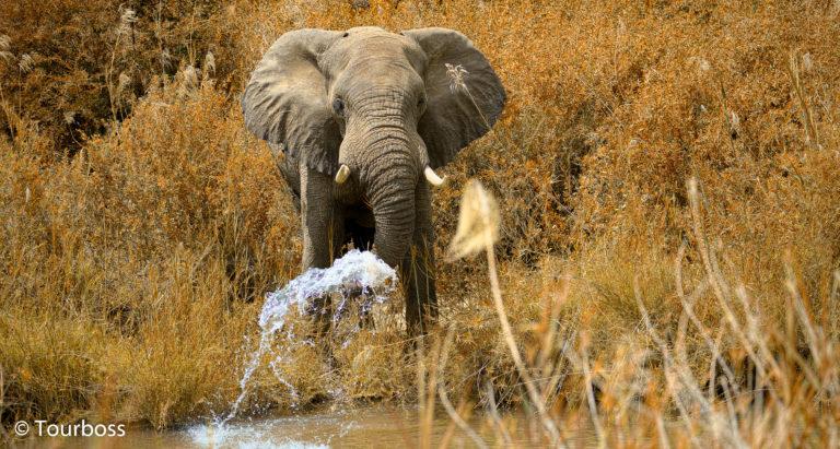 Групповые туры в Ботсвану
