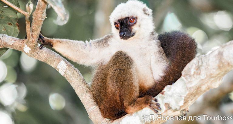 Индивидуальный тур на Мадагаскар