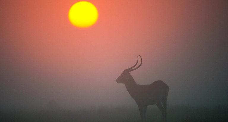 Kurfue, Замбия