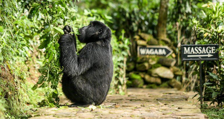 Руанда и Уганда за 8 дней