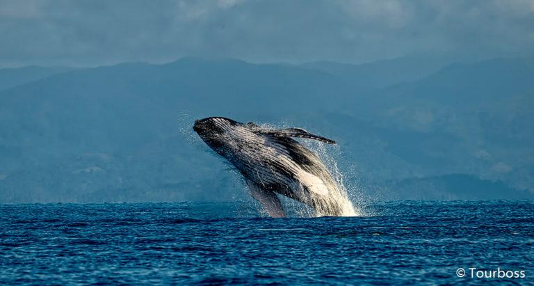 Миграция китов на Мадагаскаре
