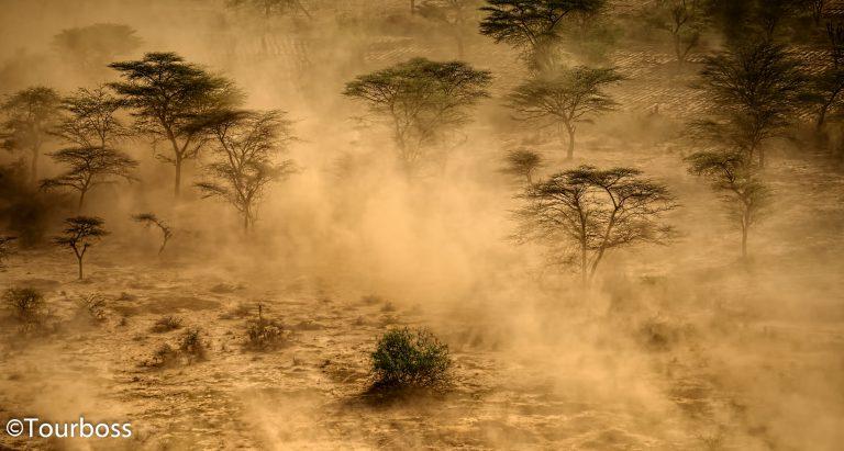 Сафари в частной концессии Segera, Кения