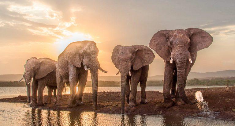 Национальный парк Hwange, Зимбабве