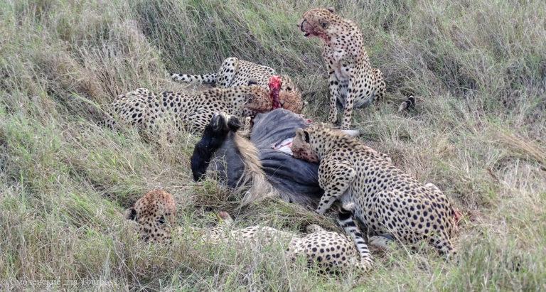 Кения. Фото и отзывы туристов