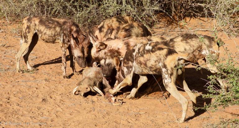 Краски Намибии