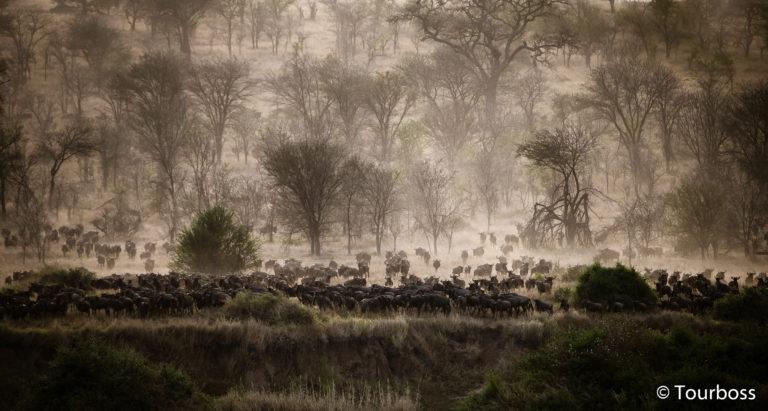 Великая Миграция на севере Серенгети