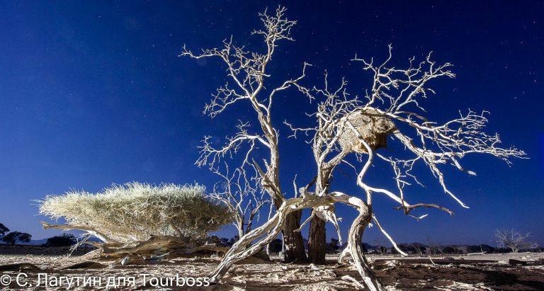 Индивидуальные туры в Намибию
