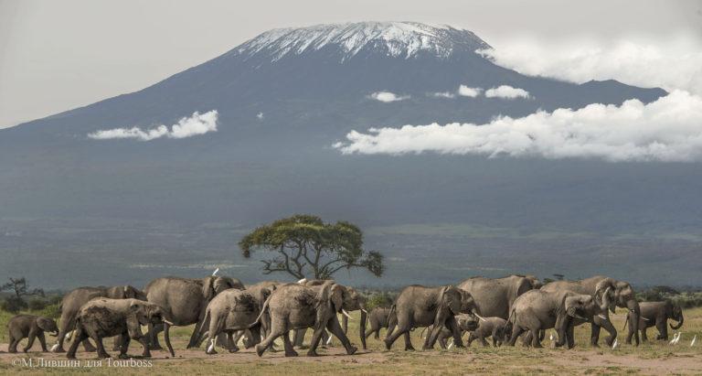 Amboseli, Кения Фото туристов