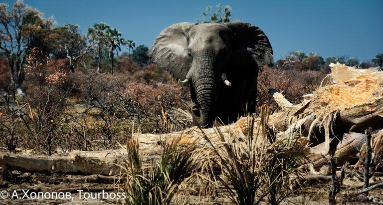 Частная концессия Abu, Ботсвана