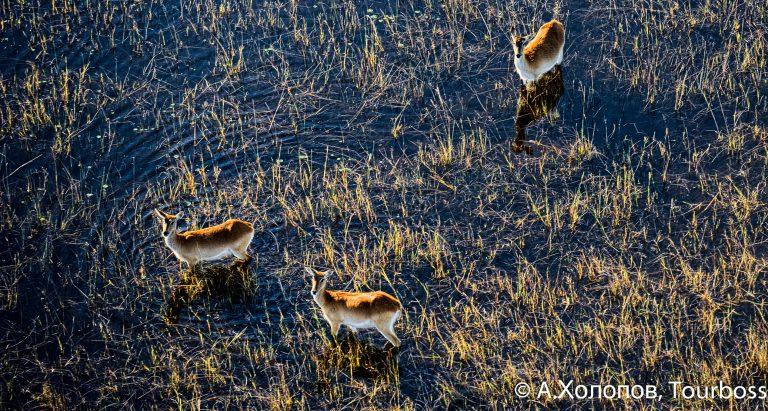 Туры в дельту Окаванго, Ботсвана