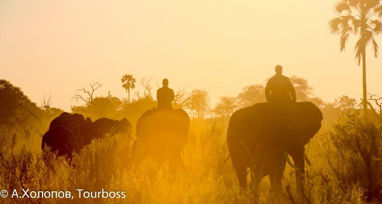 Эксклюзивные туры Ботсвану в дельту Окаванго