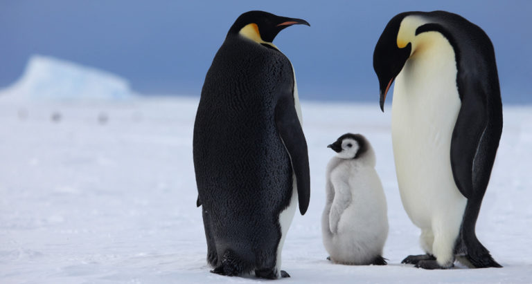 Туры в Антарктиду