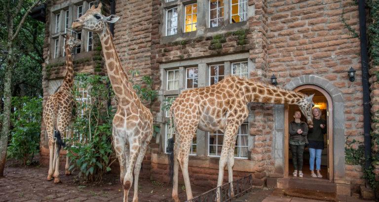 Цены на отели, кэмпы и лоджи 2021