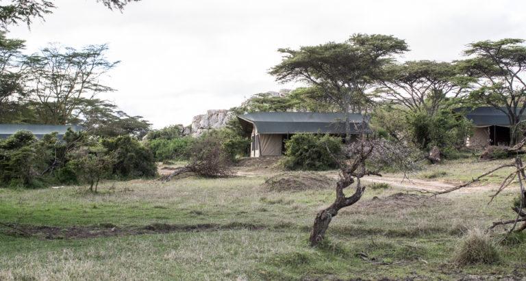 Porini Cheetah Camp, Кения