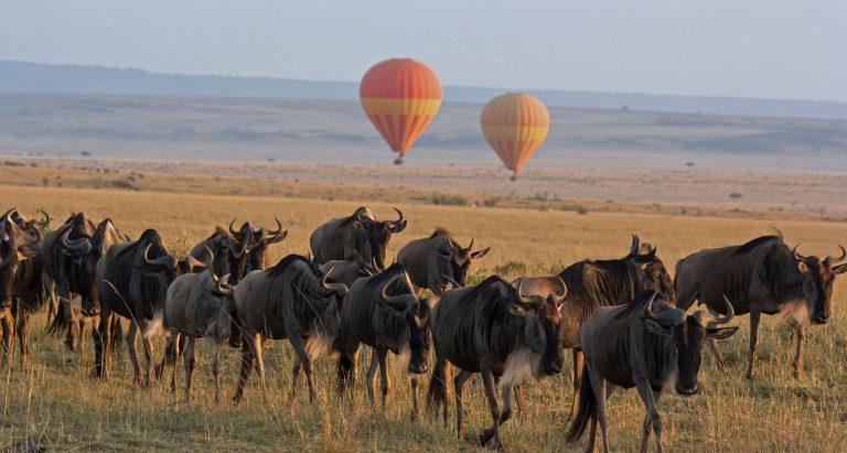 Туры в Танзанию, сафари в Танзании, отдых в Танзании, индтвидуальные туры в Танзанию, Серенгети