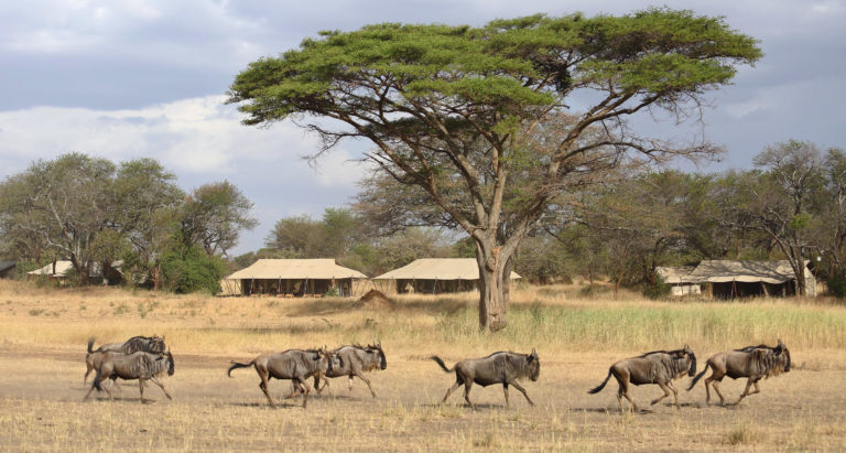 Ubuntu Camp, Танзания