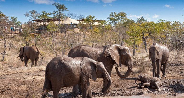 The Elephant Camp, Зимбабве