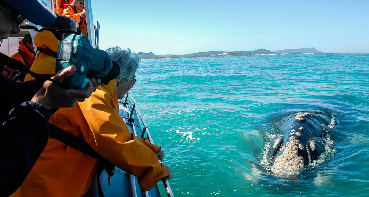 Туры на сезон китов в ЮАР