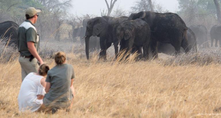 Новогодний тур с русскоговорящим гидом в Намибию, Ботсвану и на водопад Виктория