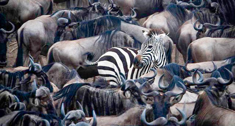 Туры на Великую Миграцию в Танзанию