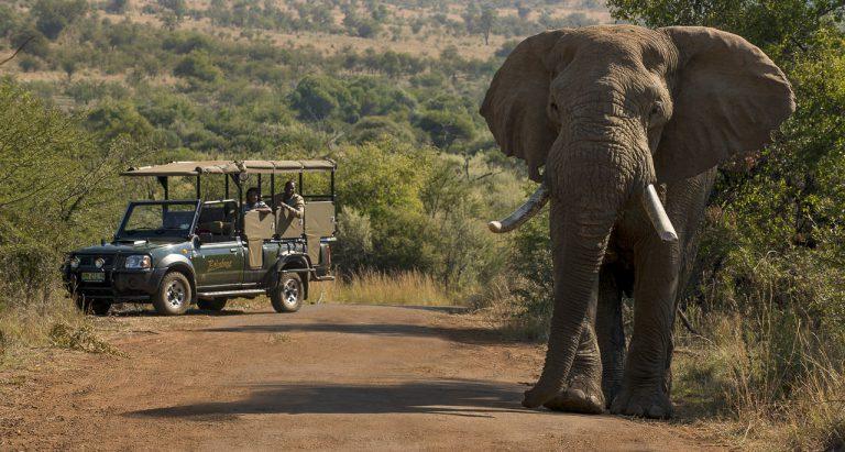 туры в ЮАР, индивидуальные туры в ЮАР, групповые фото в ЮАР, отдых в ЮАР, заповедники ЮАР, фото туристов ЮАР