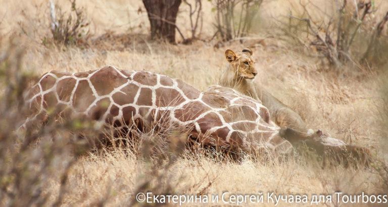 Кения. Фото туристов
