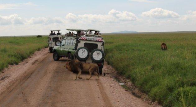 Сафари в Танзании + остров Пемба