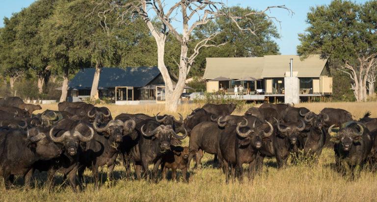 Linkwasha Camp, Зимбабве