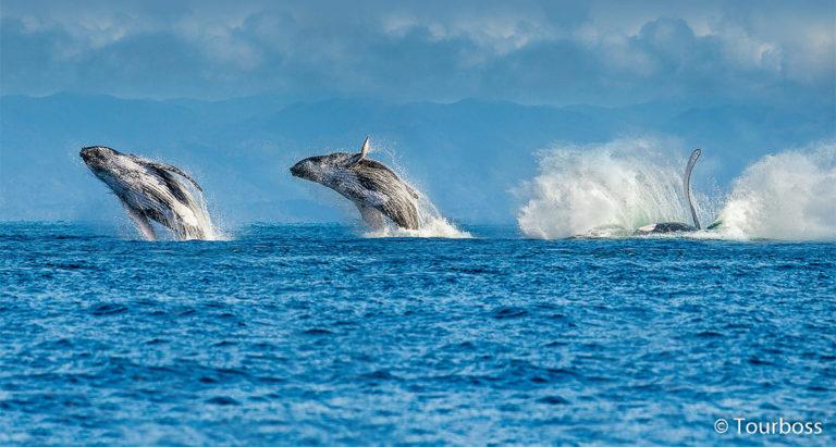Туры на миграцию китов в ЮАР