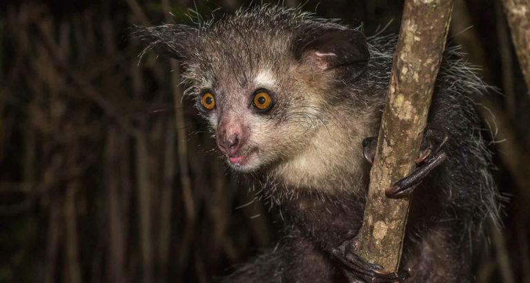 Частный резерват Palmarium, Мадагаскар
