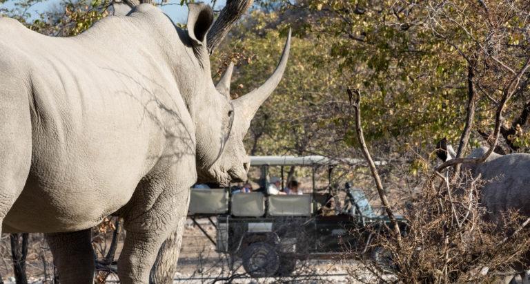 Две недели на Водопаде Виктория, в Ботсване и в Намибии с русским гидом
