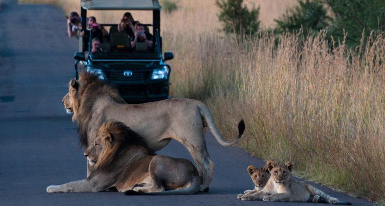 Туры в Национальный парк Pilanesberg