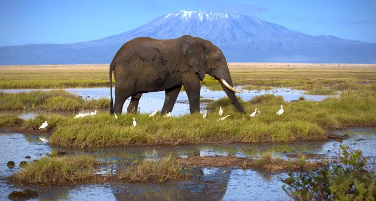 Групповые туры в Amboseli, Кения