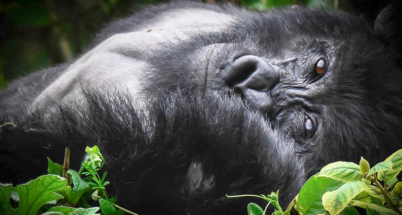 Gorilla Safari Lodge