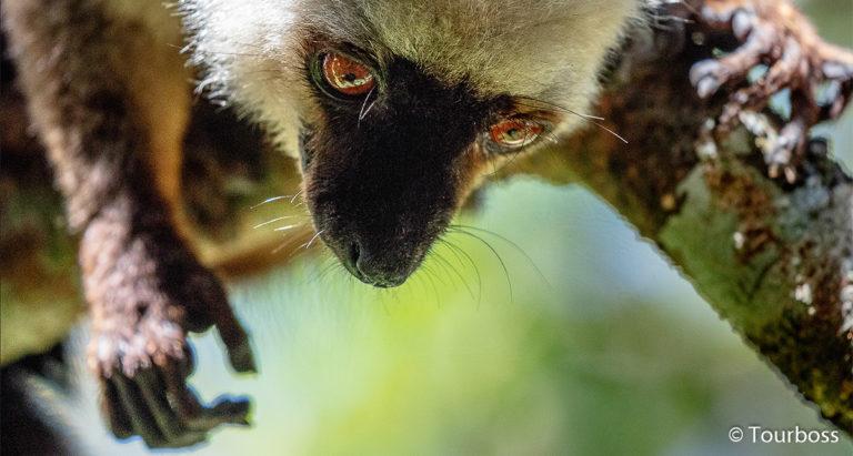 Сухой лес Kirindi, Мадагаскар