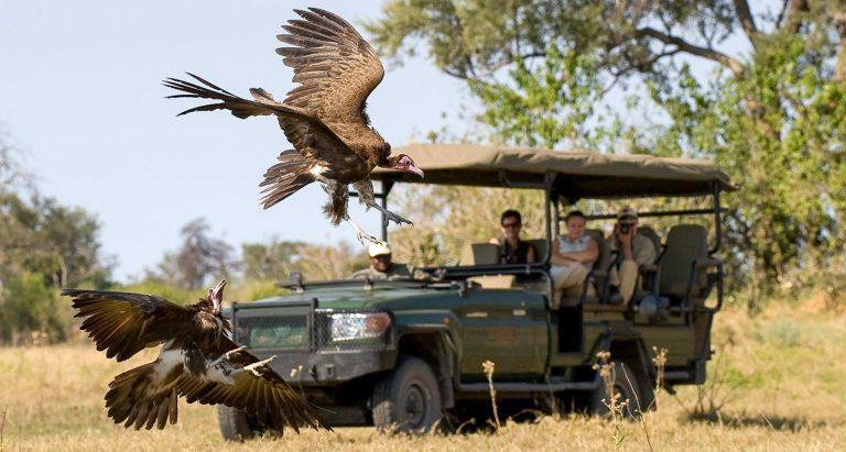 Цены на туры в Ботсвану